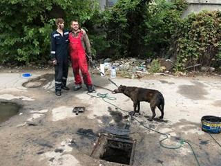 Одесситы с перфоратором семь часов спасали собаку