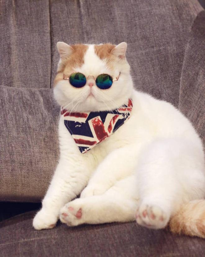 плюшевые кошки порода фото