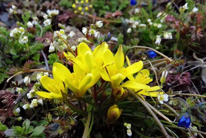 Весна пришла: на острове Хортица вовсю цветут первоцветы (ФОТО)