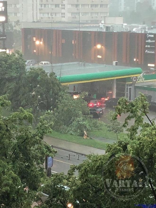 Поваленные деревья и затопленные улицы: во Львове прошел сильнейший ливень (ФОТО)