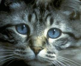 Картинки убитых котов