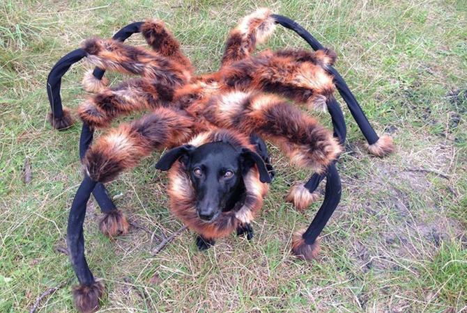 картинки пауки мутанты