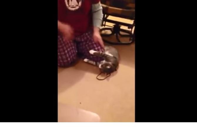 Кот притворился мертвым чтобы не идти на прогулку видео