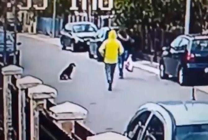 Бездомный пес спас женщину отнападения преступника