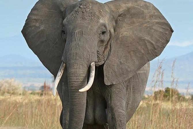 Слон сроссиянами убил германского туриста