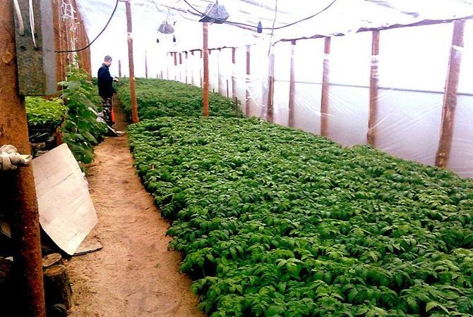 Наканадский ферме неменее 40 человек пострадали ототравления угарным газом