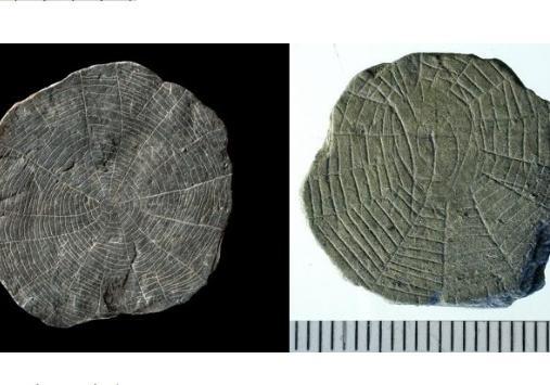 Найдены таинственные камни— Ученые врастерянности