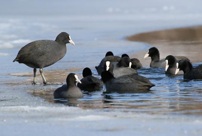 ВХерсонской области произошла массовая смерть  диких птиц