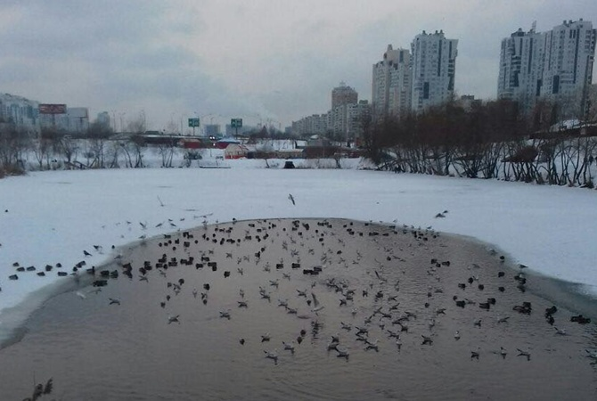 Возере накиевских Позняках задыхается рыба