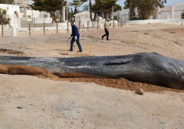 Испанские зоологи отыскали вжелудке мертвого кита 30 килограммов пластикового мусора