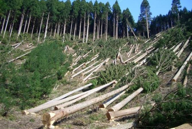На восстановление карпатских лесов нужно 100 лет - Новости на KP.UA