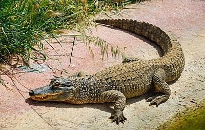 ВОдесской области сбалкона 5-ого  этажа выпал крокодил
