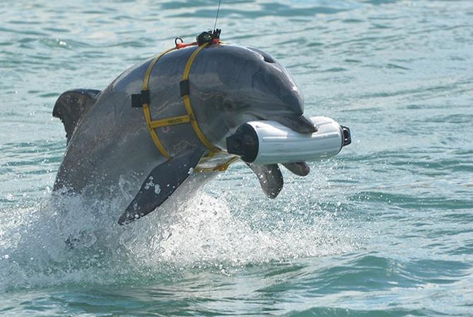 Картинки по запросу боевые дельфины крым