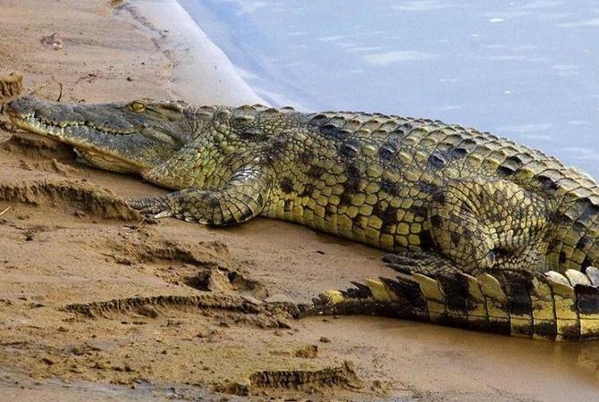 ВЭфиопии крокодил убил первосвященника, который крестил людей возере