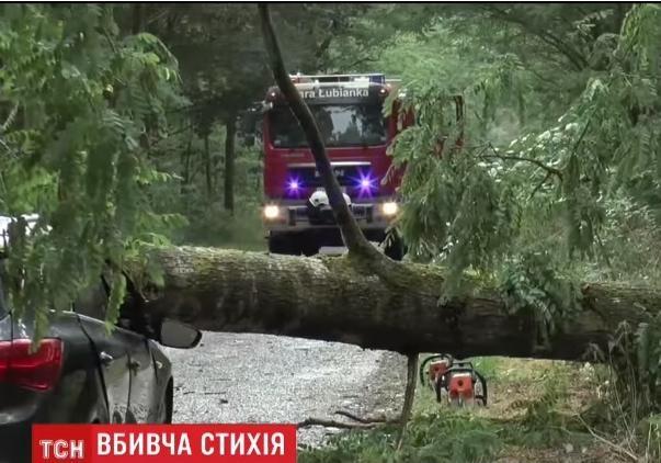В Польше во время шторма упавшее дерево убило заместителя мэра города
