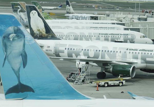 Пассажирка Frontier Airlines пронесла наборт белку, чтобы было не ужасно лететь