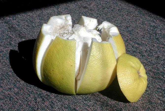 Как едят помело фрукт и чем он полезен для здоровья