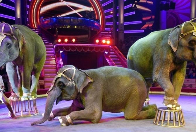 В Дании премьер-министр расхохоталась в парламенте во время доклада о цирковых животных