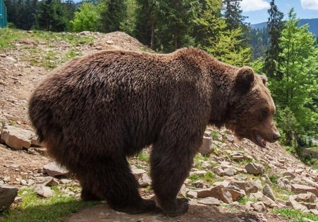 Медведи в зоопарке Харькова впали в спячку с месячным опозданием