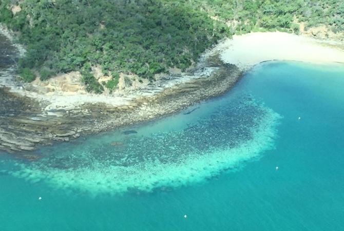 Корали у Великому Бар'єрному рифі зблякли і можуть загинути [фото, Відео]
