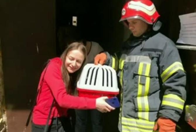 В Одессе спасатели нашли живого и невредимого кота под завалами дома