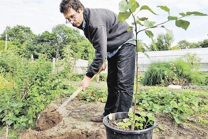 Засуха отменяется: дожди спасают урожай