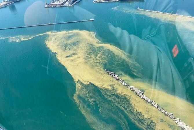 Черное море у Одессы позеленело: украинцев предупредили об опасности