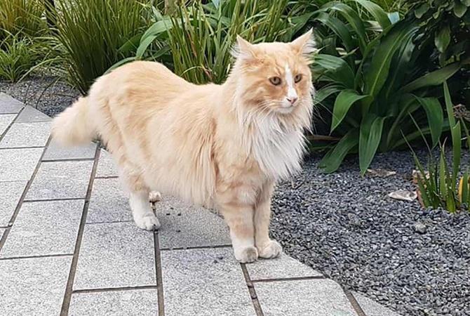 Кот претендует на звание  новозеландца года