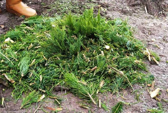 В Киевзеленстрое объяснили, что делать с елкой после Нового года