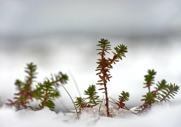 Зима закончится похолоданием и сильным ветром