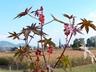 На природу с осторожностью: ТОП-5 опасных растений, которые растут рядом с нами